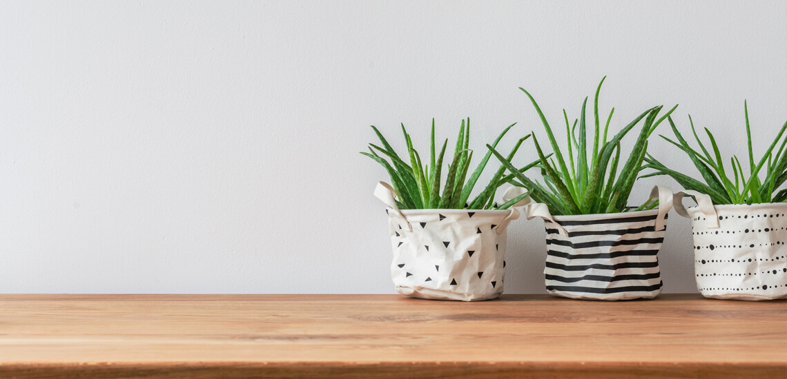 Three plants in fabric pot covers standing against white, empty wall
