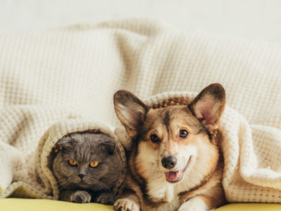 Tips For Purchasing Pet-Friendly Upholstered Furniture